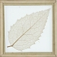 Skeleton Leaf, Holly Tree