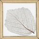 Skeleton Leaf, Lime Tree
