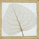 Skeleton Leaf, Poplar