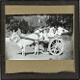 [Three men riding in cart drawn by bullock]